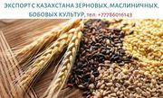 Экспорт с Казахстана зерновых,  масличных и бобовых,  тел. +77786016143
